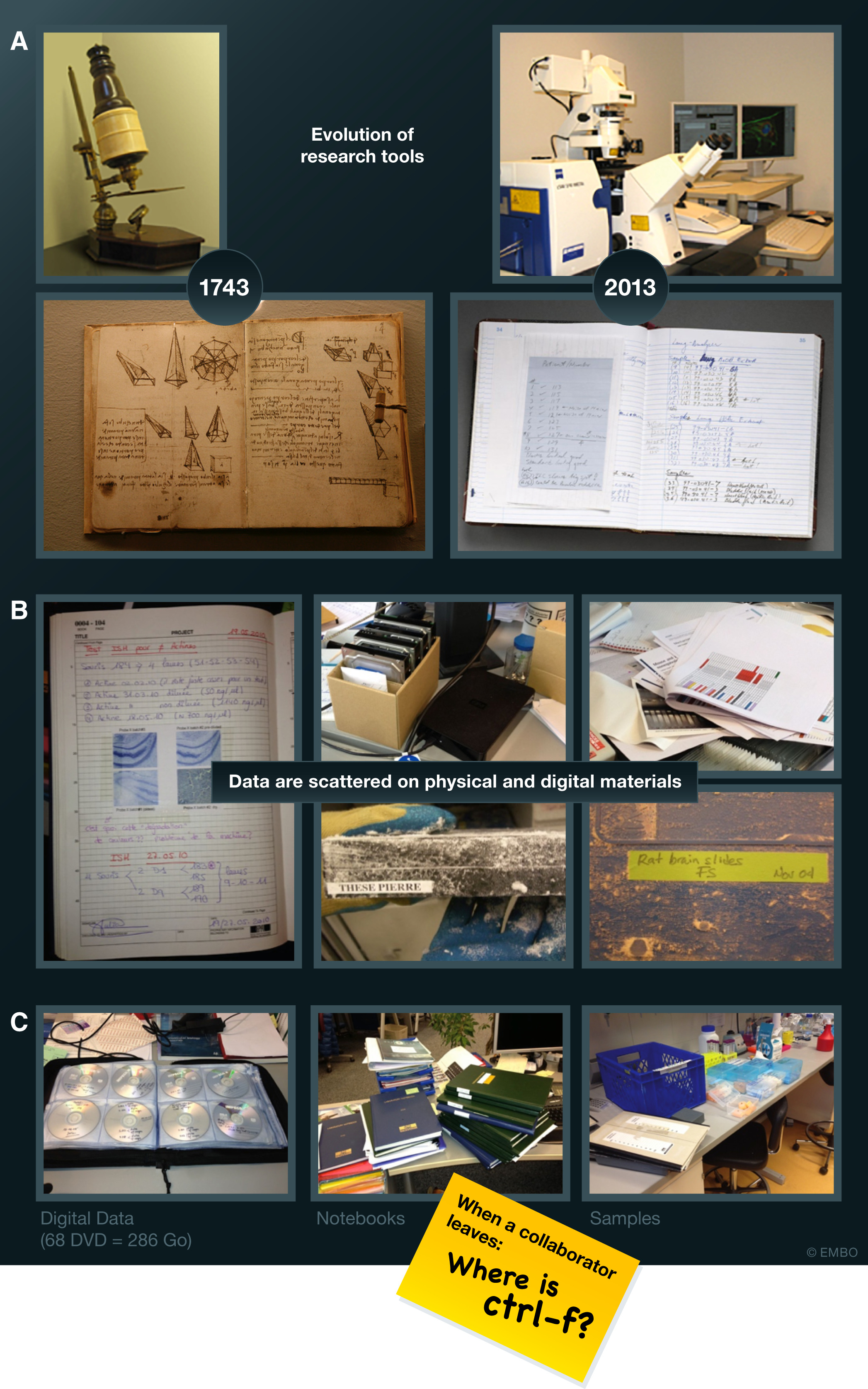 Fig1 Argento EMBOReports2020 21-3.jpg